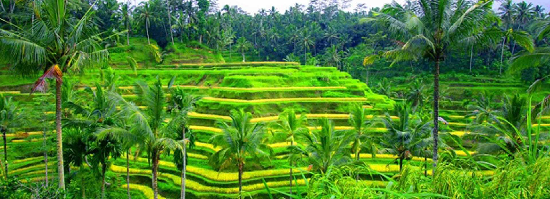 Parikrama Travels Bali Banner 5