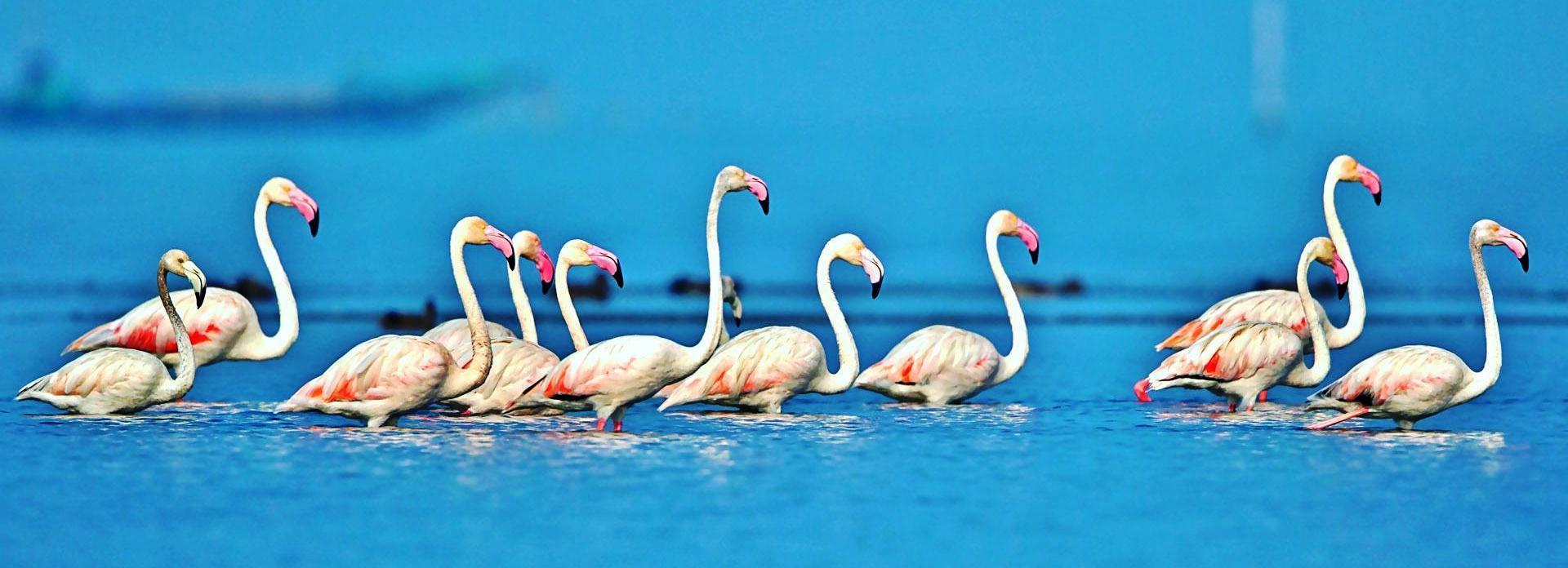 Parikrama Travels Wild life